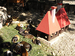 """Town"" of the guinea pigs - Budapešť, Maďarsko"