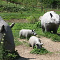 Hornless prehistoric rhinoceros (Brachypotherium) family on the tiny island - Ipolytarnóc, Maďarsko