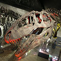 The enormous skull of the Giganotosaurus carolinii meat-eating theropod dinosaur - Budapest, Hungría