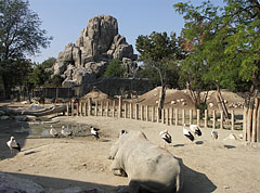 Savanna enclosure, and the Great Rock in the background - Budapeszt, Węgry