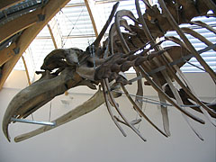 Whale skeleton in the entrance hall - Budapeszt, Węgry