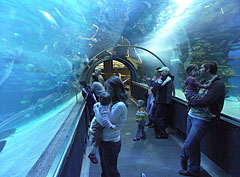 A 13-meter-long glass observation tunnel in the 1.4 million liter capacity shark aquarium - Budapest, Ungarn