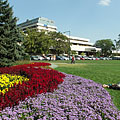 """The Great Meadow (""""Nagyrét"""") on the Margaret Island, a grassy and flowery area on the north side of the island, surrounded by large trees and hotels - Budapest, Ungarn"""