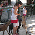 Petting zoo with goats and children - Budapest, Ungarn
