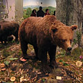 Forest genre scene with a mounted brown bear - Budapest, Ungari