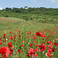 Poppy field close to the lookout tower on Somlyó Hill - Mogyoród, Ungari