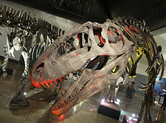 The enormous skull of the Giganotosaurus carolinii meat-eating theropod dinosaur - بودابست, هنغاريا