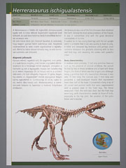 The information board of the Herrerasaurus ischigualastensis - Budapest, Hungary