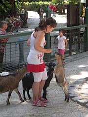 Petting zoo with goats and children - Budapest, Hungary