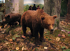 Forest genre scene with a mounted brown bear - Budapest, Hungary