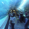 A 13-meter-long glass observation tunnel in the 1.4 million liter capacity shark aquarium - Budapest, Hungary