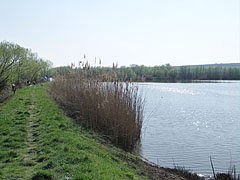 The Sinkár Lake close to Csővár village - Csővár, Hungary