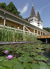The healing could come between flowers floating in the thermal water - Hévíz, Hungary